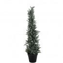 Pine pine, potted, snowed, H65cm, green